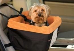 Como transportar animais de estimação no carro