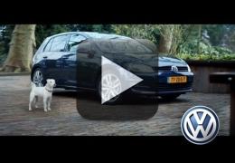 Vídeo: Cãozinho louco por carro