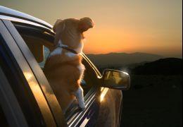 Série fotográfica reúne cachorros na janela do carro