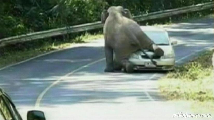 Vídeo incrível mostra elefante destruindo carro