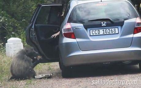 Imagens flagram macaco roubando comida de dentro de um carro