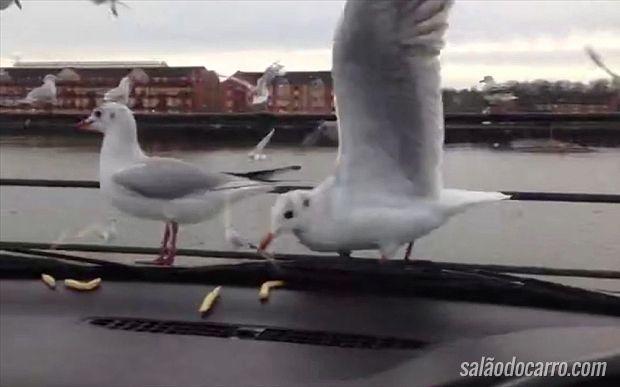 Veja o que pode acontecer quando você deixa salgadinhos dentro do carro