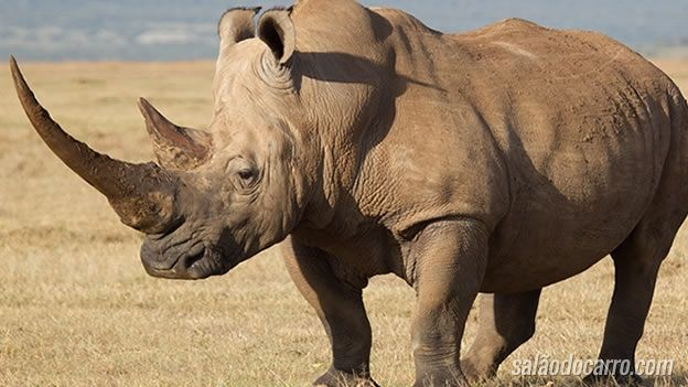 Vídeo mostra carro sendo atacado por um rinoceronte