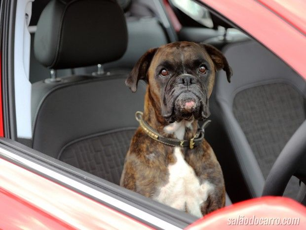 Cachorro demonstra sistema de estacionamento de carro