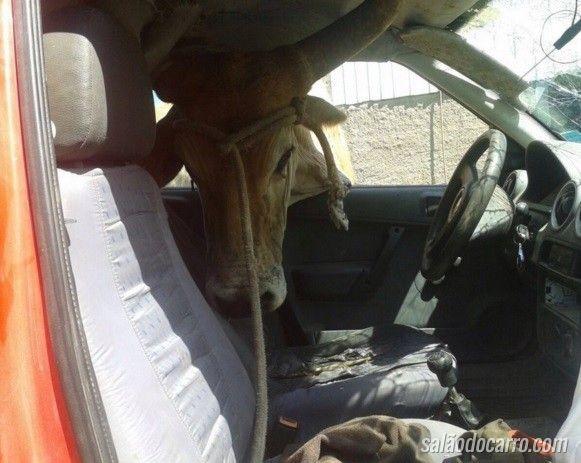 Boi fica com a cabeça presa na janela de carro