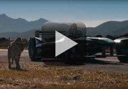 Gueopardo aposta corrida com carro da F-E