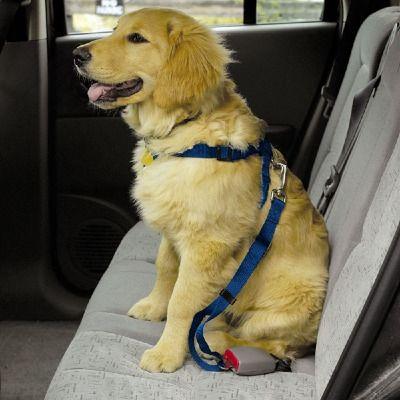 Cinto de segurança para cachorros