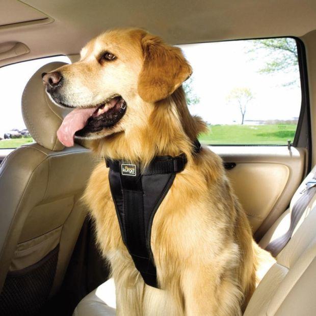 Cinto de segurança cachorro carro