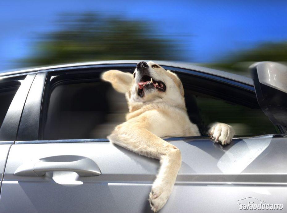 Labrador, na janela do carro