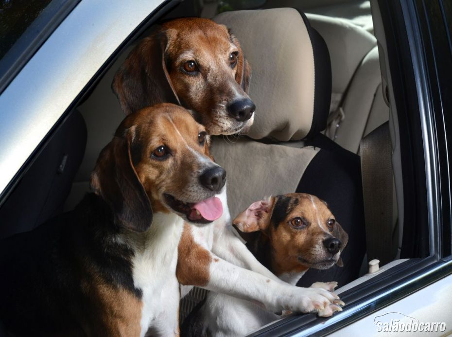 Beagles, animados pro passeio